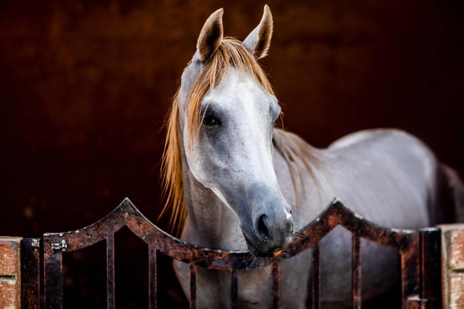 Sharjah Horse Stables, Al Madam Stables