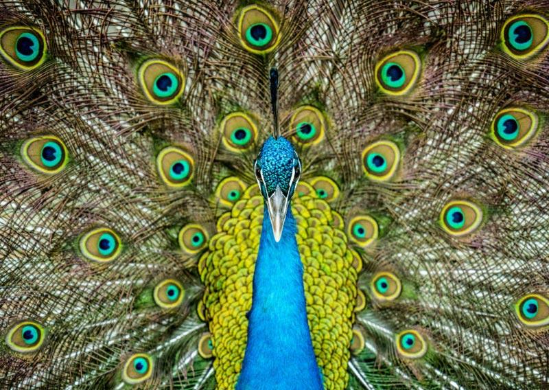Peacock park photography, Emirates Towers, Dubai, UAE by Shea Winter