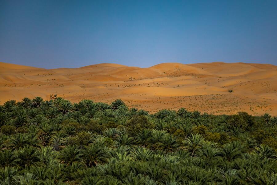 Desert Jungle Abstract Fine Art Photography