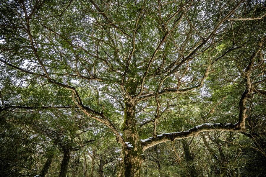 Tree Abstract Fine Art Photography
