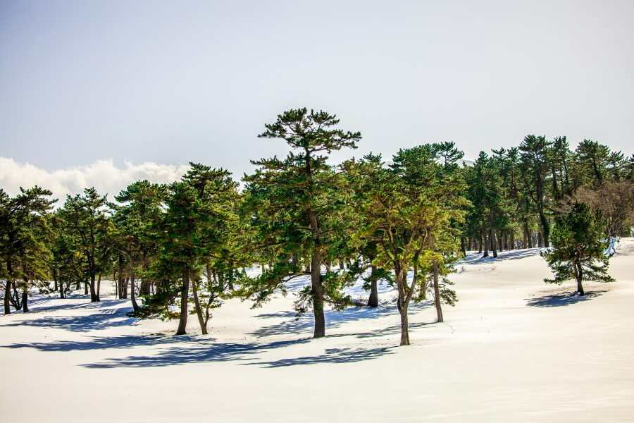 Trees And Snow Abstract Fine Art Photography